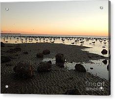 Beach Rocks Barnacles And Birds Acrylic Print