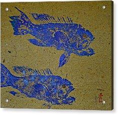 Black Sea Bass - Rockfish Acrylic Print