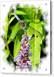 Acrylic Print featuring the photograph  Blue Dragonfly by Lila Fisher-Wenzel