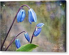 Bluebells And Beyond Acrylic Print