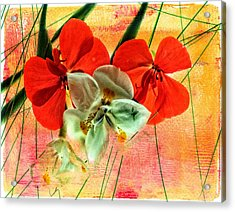 Bougainvillea And Paper White Acrylic Print
