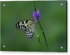 Butterfly On Flower  Acrylic Print by Sandy Keeton