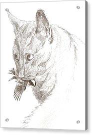 Cat And Chickadee Acrylic Print