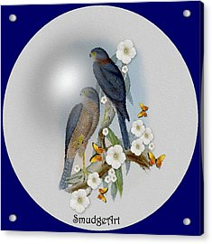 Collared Sparrow Hawk Acrylic Print by Madeline  Allen - SmudgeArt