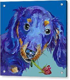 Dach Acrylic Print by Pat Saunders-White