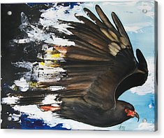 Acrylic Print featuring the mixed media  Everglades Snail Kite by Anthony Burks Sr
