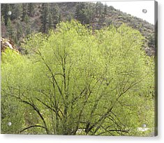 Tree Ute Pass Hwy 24 Cos Co Acrylic Print