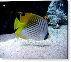 Acrylic Print featuring the photograph  Fish by Suhas Tavkar