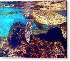 Honu On The Reef Acrylic Print