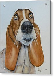 Hound Dog's Pleeease Acrylic Print by Kelly Mills