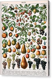 Illustration Of Fruit Varieties Acrylic Print by Alillot