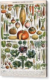 Illustration Of Vegetable Varieties Acrylic Print