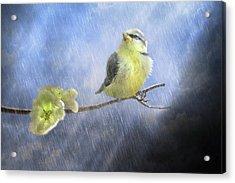 Little Sunshowers Acrylic Print by Trudi Simmonds