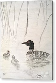 Loon Float Acrylic Print by Sandra Lunde