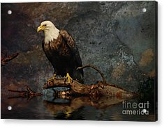 Magestic Eagle  Acrylic Print by Elaine Manley