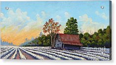 Montmorenci Cottonfield Acrylic Print