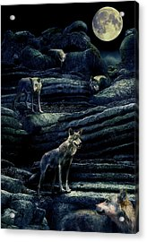 Moonlit Wolf Pack Acrylic Print by Mal Bray