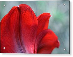 Mprints - Perfect Petal Acrylic Print by M  Stuart