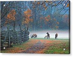 Oconaluftee Visitor Center Elk Acrylic Print