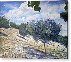 Olive Grove At Monte Cardeto Lazio Italy 2009  Acrylic Print by Enver Larney