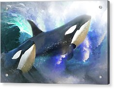 Orca Wild Acrylic Print