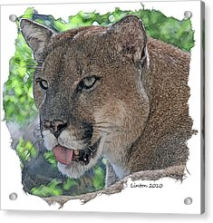 Panther 2 Acrylic Print by Larry Linton