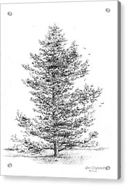 Pine Acrylic Print by Jim Hubbard