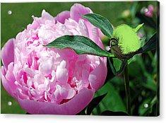 Pixie Gardener Acrylic Print by Patricia Motley