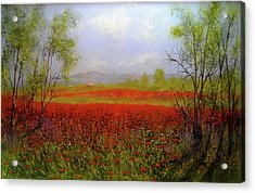Poppie Morning 2 Acrylic Print