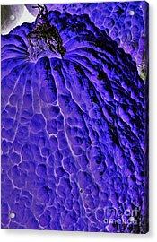 Purple Pumpkin By Jasna Gopic  Acrylic Print