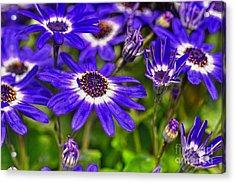 Senetti Flower Acrylic Print