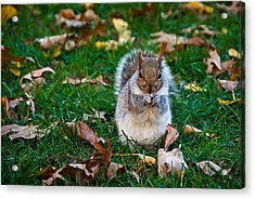 Squirrel Eating Nut On Colorful Green Grass And Brown Leaves Acrylic Print