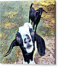 😂 Still Love This One #goat Acrylic Print