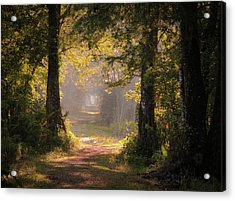 Swamp Trail Acrylic Print