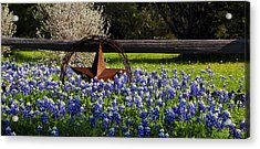 Texas Bluebonnets IIi Acrylic Print by Greg Reed