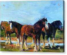 The Four Clydesdales  Acrylic Print by Kathy Dueker