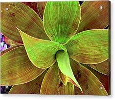 Translucense Acrylic Print
