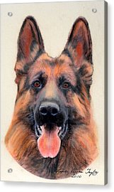 Tribute To The German Shepherd Acrylic Print by Linda Diane Taylor