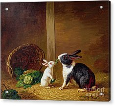 Two Rabbits Acrylic Print
