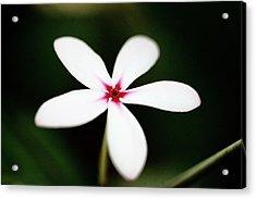 White Flower Acrylic Print by Paul Michaels