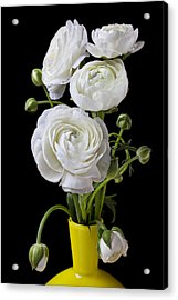 White Ranunculus In Yellow Vase Acrylic Print by Garry Gay
