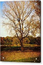 Wisdom Tree Acrylic Print by Kyle West