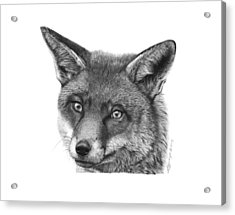 Acrylic Print featuring the drawing 044 Vixie The Fox by Abbey Noelle