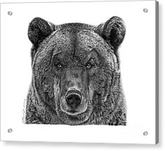 Acrylic Print featuring the drawing 045 Papa Bear by Abbey Noelle