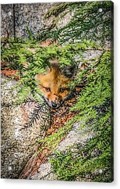 #0527 - Fox Kit Acrylic Print