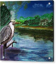 071115 Blue Heron Pastel Sketch Acrylic Print