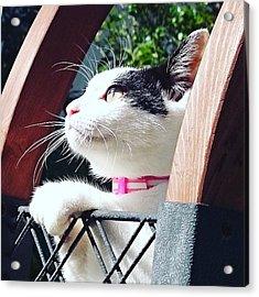 Koneko Means A Kitten Acrylic Print