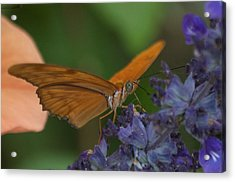 A Butterfly Sipping Nectar 1 Acrylic Print by Susan Heller