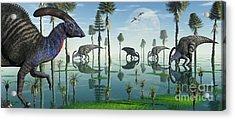 A Group Of Parasaurolophus Duckbill Acrylic Print by Mark Stevenson
