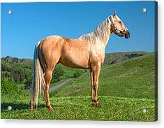 A Horse Named Shaker Acrylic Print